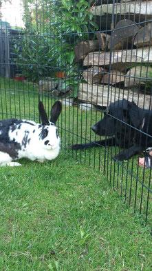 Nein, Henriette, ich finde nicht, dass Lotte eine optimale Hasenpflegerin wäre.