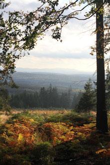 Blick vom Hahneberg über den Reinhardswald