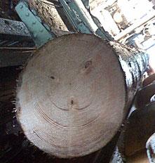 Ein lachender, grinsender Rundholzstamm
