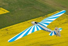 Der Habicht bietet mit seinen Knickflügeln ein tolles Flugbild (Foto: Sabine Rieß)