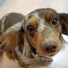 アシスタントの愛犬です!