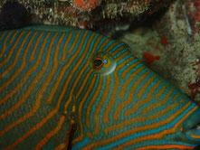 石垣島でのんびりダイビング「大崎オオハマサンゴの根」