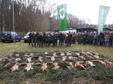 Fuchswoche im Jagdverein Hubertus Giessen