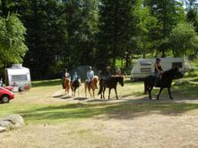 Bild Pferde