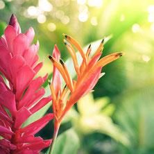 ハワイオアフ島貸切チャーター夏の光に輝くハワイの花々とグリーン