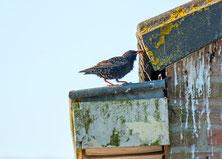 鳥類対策 ドバト減数管理 コウモリ類