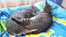 Mit Tieren Sprechen - Foto Katzen - Erfahrungsbericht Mélanie