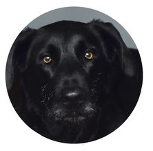 Barney - Haustier bei Vordenker Versicherungsmakler Berlin