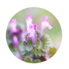 野の花の写真はコチラ