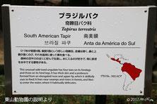 東山動物園のマレーバクの説明