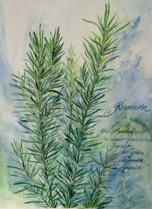 Rosmarin - Aquarell - 30x40cm - 46x62cm