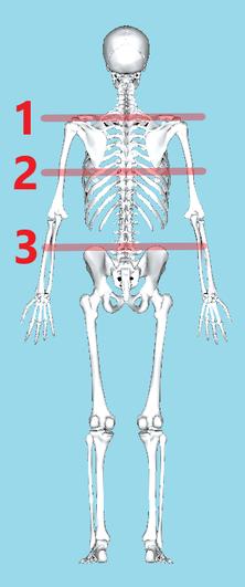 鎖骨肩峰端・肩甲骨下角・腸骨稜