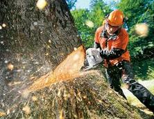 Holzschlägerung Durchforstung