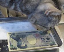 紙幣の耐水実験に興味津々のトム君