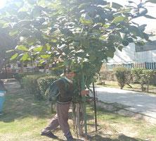2014年に「子供の森」計画で植えた木は、 こんなに大きく成長しました!