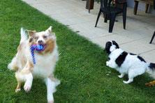 Quickfedel begrüßen zwei Hunde den Besuch