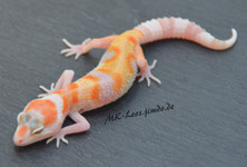 Extreme Emerine Tremper A. Jungle Eclipse