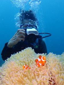 石垣島でのんびりダイビング「クマノミ大好き」ヒートハートクラブ