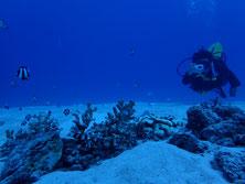 石垣島をのんびりダイビングするダイバー