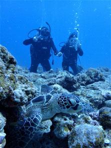 石垣島でのんびりダイビング「大物三昧」ヒートハートクラブ
