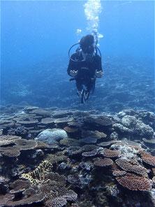 石垣島でのんびりダイビング「珊瑚礁復活」ヒートハートクラブ