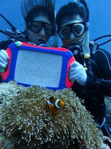 石垣島でのんびりダイビング「新婚さん」ヒートハートクラブ
