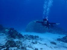 石垣島の石西礁湖ポイント