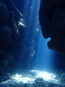 石垣島でのんびりダイビング「ケーブポイント」