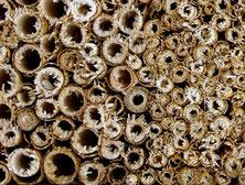 Schilfmatte Bastmatte Insektenhotel Insektennisthilfe Reet Schilf Pflanzenstengel Pflanzenstängel Wildienen wildbee insect hotel bee house Schnittkanten