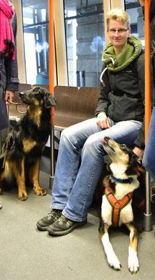 Frauchen sitzt in der Straßenbahn und ich liege unter der Sitzbank und schaue zu Frauchen hoch, dabei lecke ich mir die Nase, bestimmt gibt es gleich Käse. Rechts neben uns sitzt ein anderer Hund neben einer Person, die nicht mehr im Bild ist.