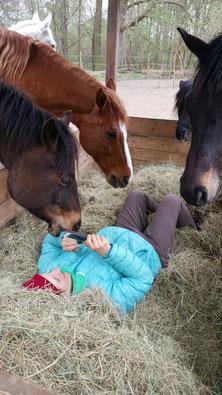 Pferdegestützte Therapie und Coaching mit Pferden