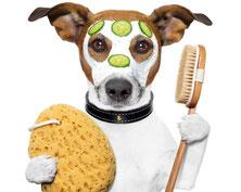 Ein Hund mit Wellnessmaske.