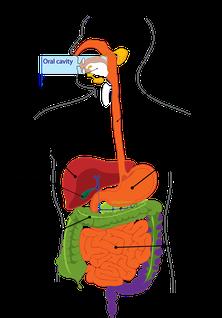 Verdauungsprobleme in der Heilpraktikerpraxis