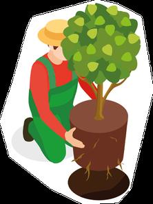 Baum pflanzen in Würzburg und Umgebung, Tipps vom Profi, welche Erde, wie groß muss das Loch sein