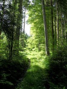 Bär im Wald (wo ist er?)
