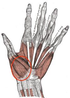 の 付け根 筋肉 痛 親指