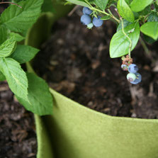 Pflanztaschen sind ideal für den Winterschutz von Topfpflanzen