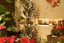 Flower & Café Kaqoo