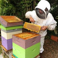 Inspection des ruches chez miel et goûter d'antan dans les Deux Sèvres 79