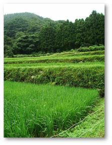 福岡県玄米
