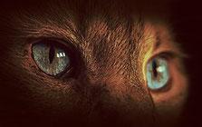 Bild: 2 Augen