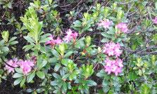 flora dolomiten