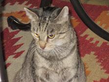 Mimi unsere Katzenmama von Bonny und Kitty, Amy und Nara