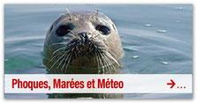 Les Phoques - Heures de marées