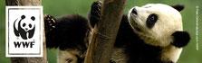 Logo WWF Panda