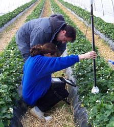 la sonde DIVINER portative mesure l'humidité du sol - Agralis