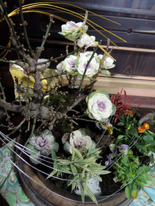 2014年末作、冬を彩る寄せ植え