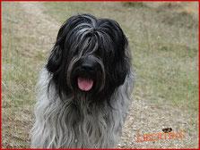 Wunderbarer Zuchthund