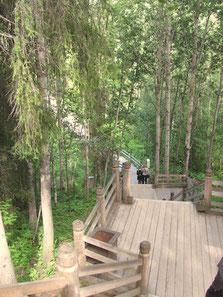 Holztreppe im Malye Korely