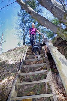 Hund am Berg; Treppe